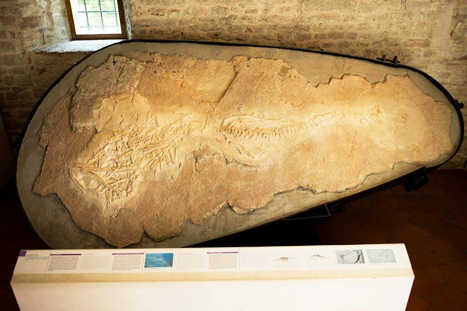 Nel Museo Speleopaleontologico di San Vittore di Genga è conservato un fossile di ittiosauro risalente a circa 150 milioni di anni fa. Fu scoperto il 20 luglio 1976, nei pressi di Camponocecchio, da un ricercatore locale durante i lavori per la costruzione di una galleria lungo la S.S.76.